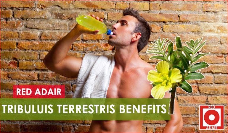 tribulus terrestris benefit